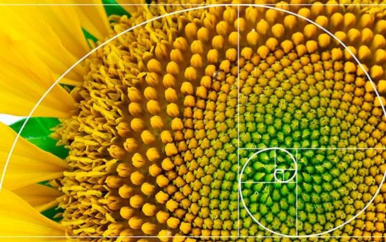 Fibonacci dans la nature